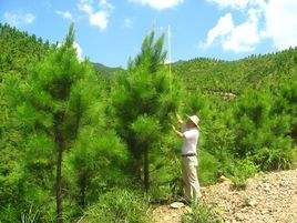 安徽省明年计划营造林730万亩