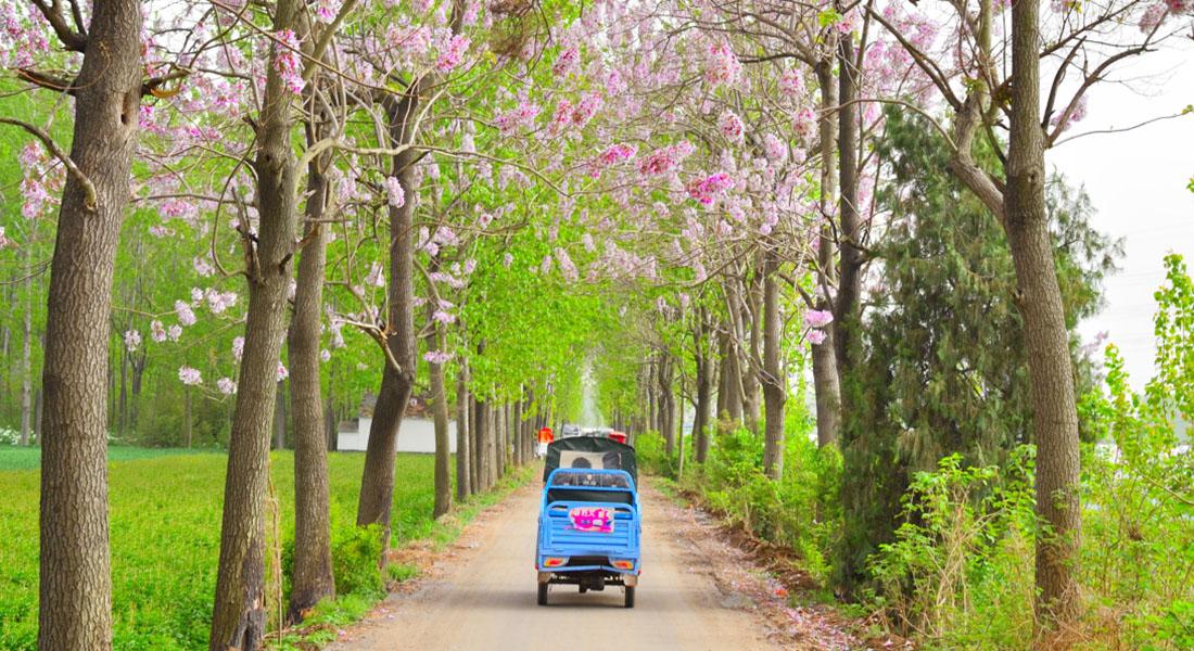 美麗鄉村路