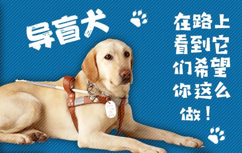 國際盲人節 導盲犬,在路上看到它們希望你這麼做