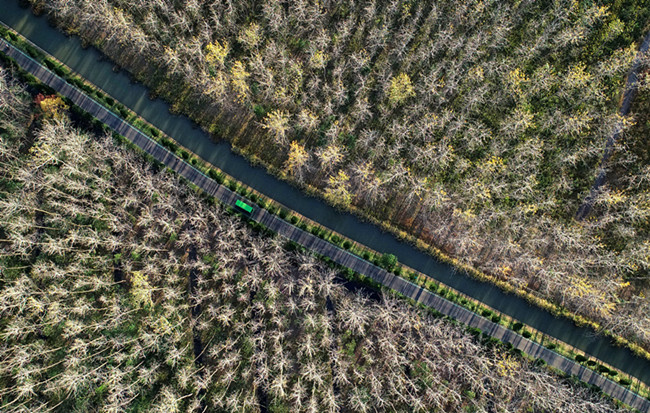 航拍合肥濱湖國家森林公園:秋色旖旎 層林盡染