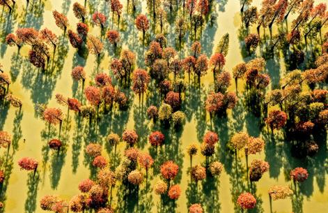 航拍:層林盡染大漢塘 一池美艷入冬來