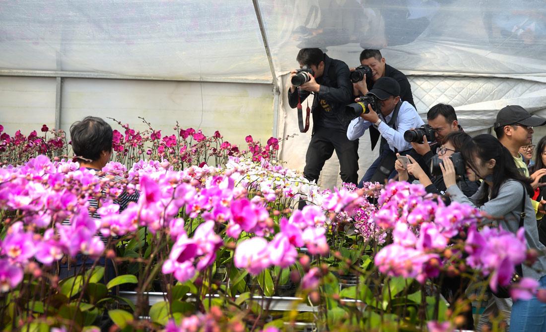 精品花卉吸引(yin)眾多攝影師的關注(zhu)