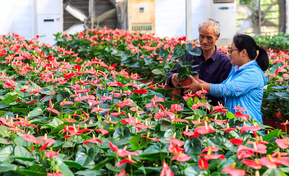 挑選培育精品花卉