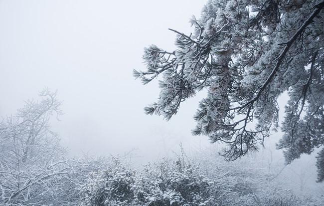 玉樹瓊枝作煙蘿 黃山迎來入冬首場降雪