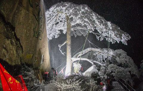 黃山:雪夜守護忙 迎客松無恙