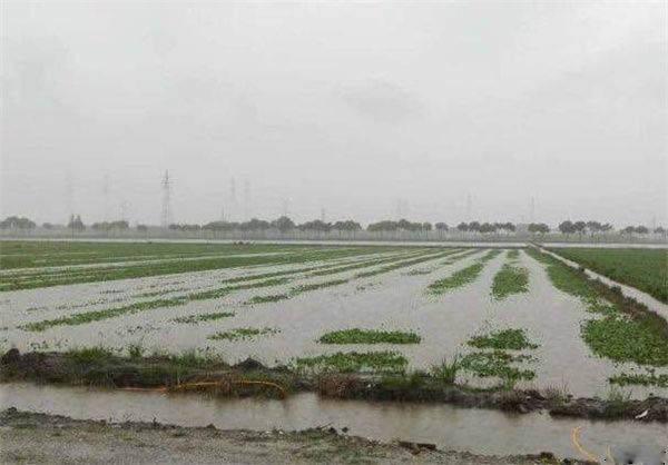 安農大破解沿淮地區糧食作物澇漬災害難題