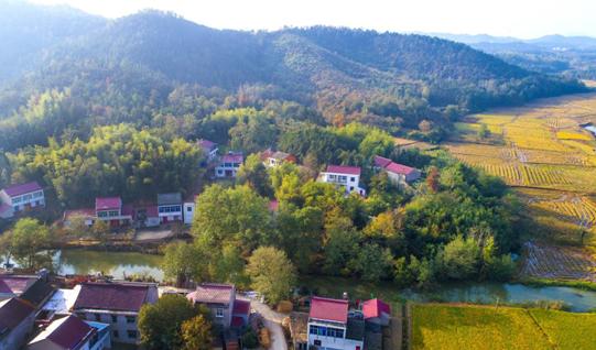加強(qiang)生態建(jian)設 打造綠色富裕棠樹(shu)