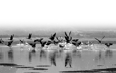 安徽省有記錄水鳥總數首次超過20萬只