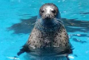 合肥海洋世界即將迎來第36個國際海豹日