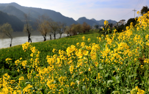 春到新安江