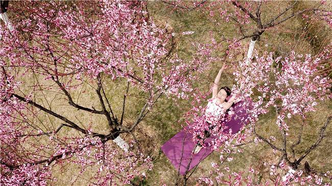 航拍:梅深林如染 尋芳踏春來