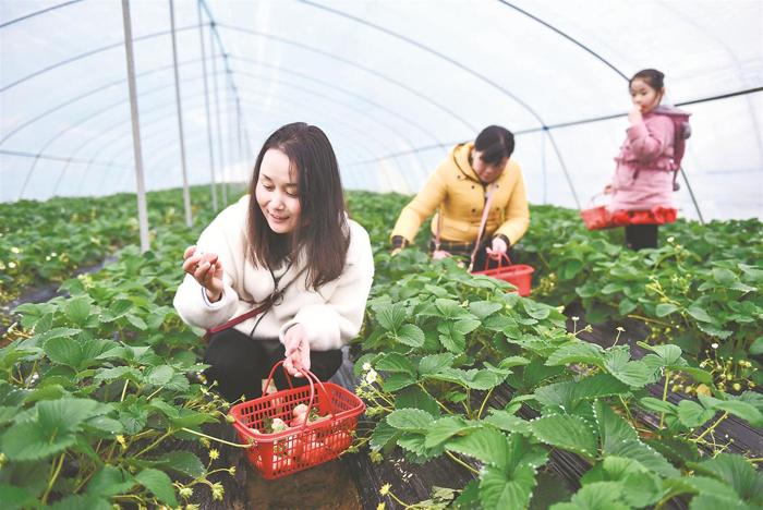 """含山︰鄉(xiang)村""""采摘游""""助民增收"""