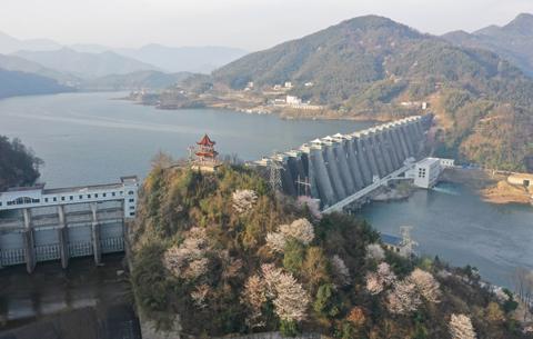 航拍:櫻花開遍大別山