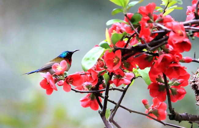 花香春意濃 鳥歡自然鳴