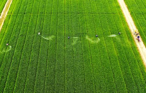 航拍:春野農事忙