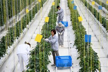 安徽肥西:大力推廣現代農業發展模式