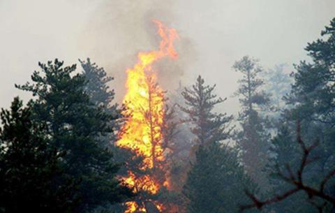 撲打山火的基本要領是什麼