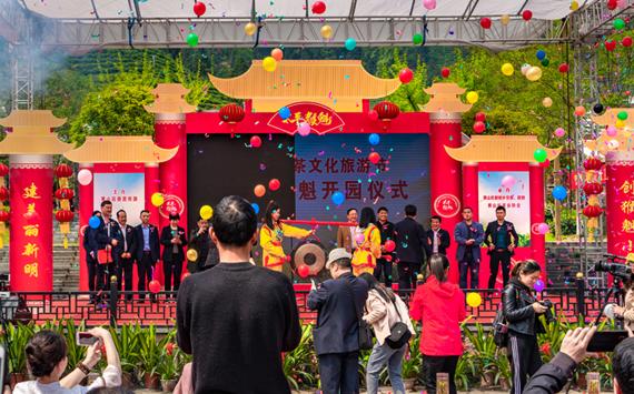 安徽黃山:太平猴魁正式開園採摘