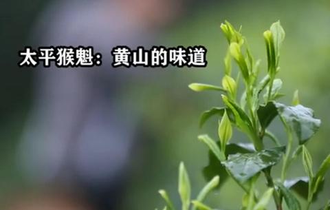 【微視頻】太平猴魁:黃山的味道