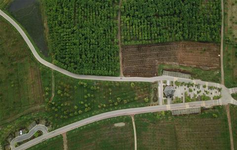 安徽肥西:苗木産業助力鄉村振興
