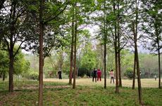 安徽淮南:綠色打造美麗家園