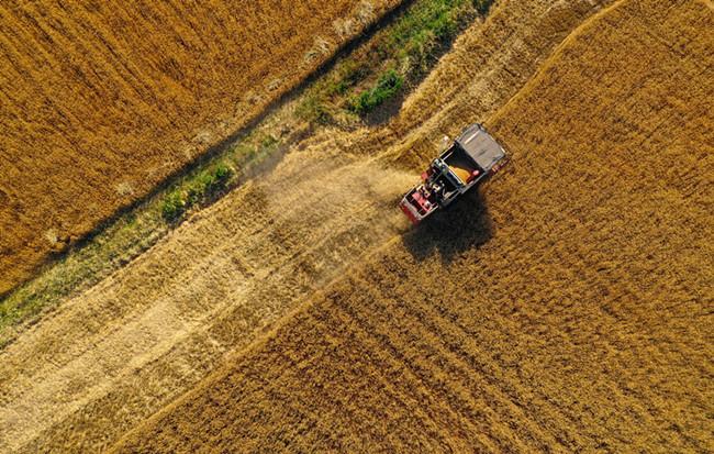 航拍:萬畝小麥開鐮收割