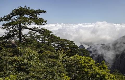 黃山:山巒滴翠 雲煙競秀