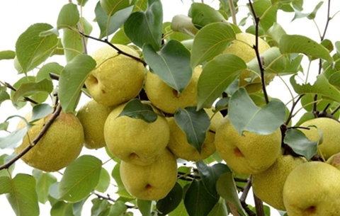 安徽省5個地理標志農産品入圍國家保護工程