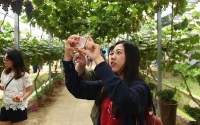 合肥:兩岸學子感受現代農業