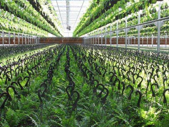 安徽省水生蔬菜種植面積居全國前列
