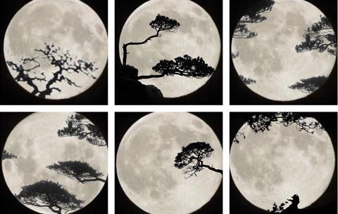 明月松間照 寫意黃山秋