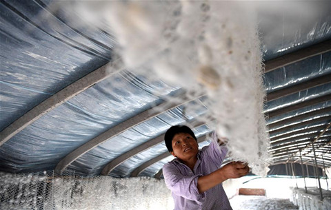 安徽肥西:小蠶桑 大産業