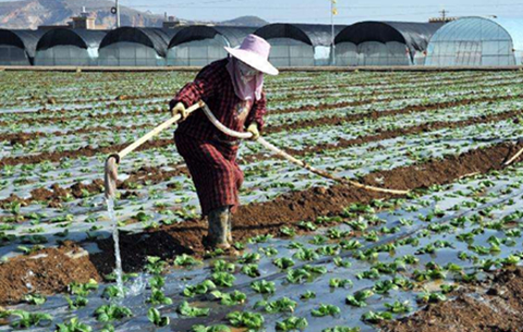 安徽省緊急部署農業抗旱生産