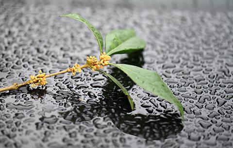 微距:品味秋雨之美