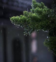 組圖:淮南春雨