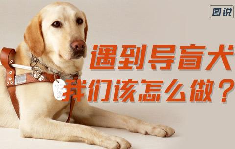 遇到導盲犬,我們該怎麼做?