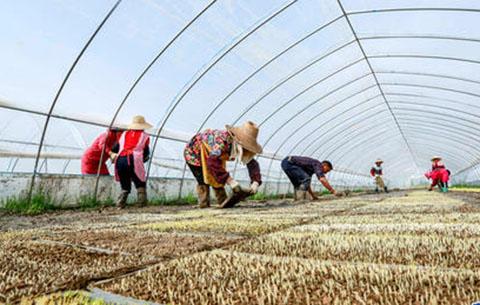 安徽:75.9萬戶貧困戶實施農業特色産業扶貧項目