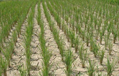 國家減災委、應急管理部針對安徽、江西嚴重旱災啟動國家Ⅳ級救災應急響應