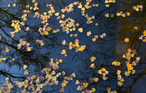 航拍:落葉繽紛 秋色如畫