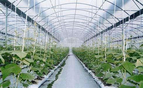安徽對農業溫室大棚實施購置補貼