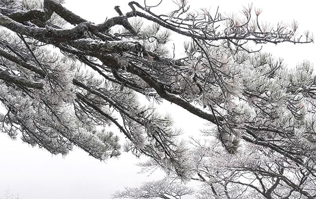 微視頻:雲海映霞光 妖嬈黃山雪
