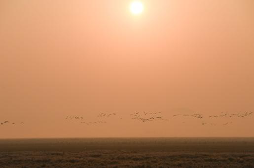 安徽(hui)升金湖(hu)迎(ying)來候鳥遷徙高峰