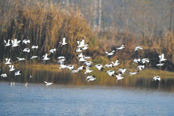 合肥立法保護環巢湖十大濕地