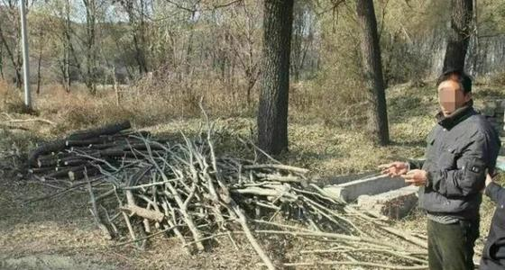 4男子濫伐林木被刑拘