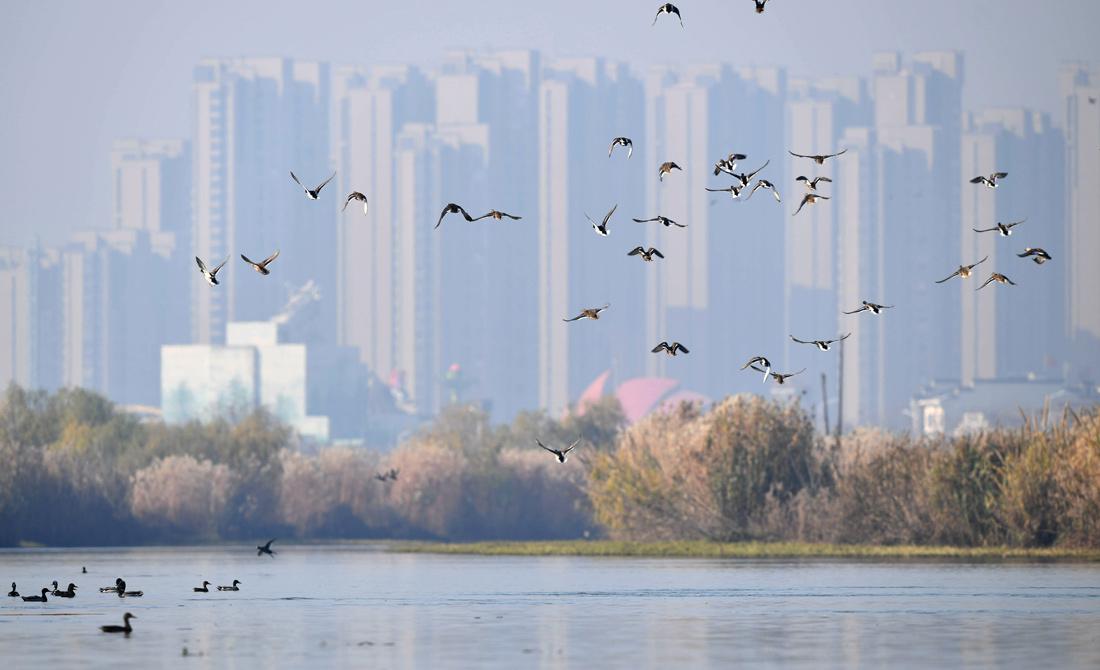 大(da)湖濕地 候鳥翔集