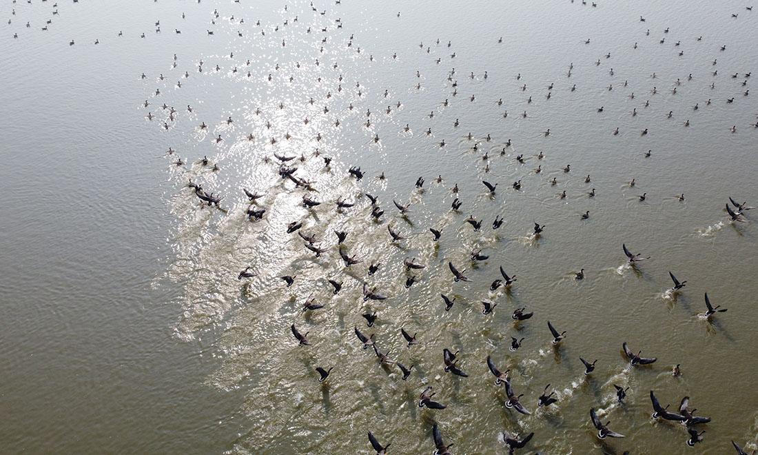 安徽︰冬日濕地 候鳥紛至