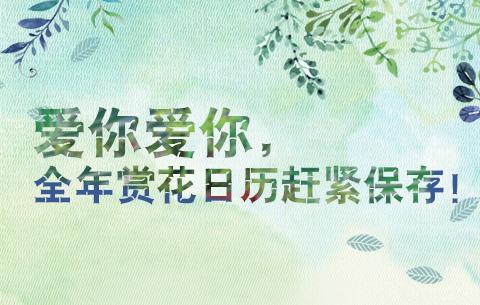 愛你愛你,全(quan)年(nian)賞(shang)花日歷趕緊保存!