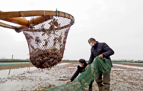 蟹苗交易點對點 化解蟹農煩心事