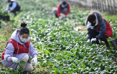 安徽:防疫農時兩不誤
