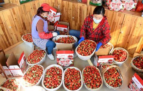 安徽肥西:搶抓農時 加大市場扶貧果蔬供應量